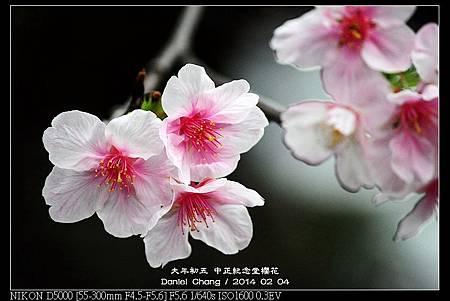 nEO_IMG_140204--CKS Cherry Blossoms 130-800.jpg