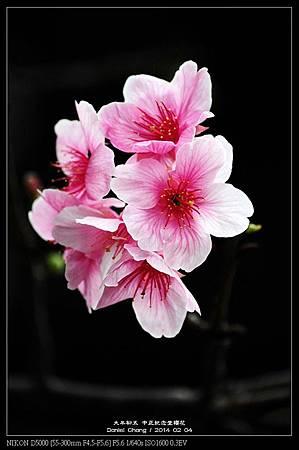 nEO_IMG_140204--CKS Cherry Blossoms 144-800.jpg
