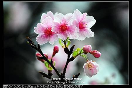 nEO_IMG_140204--CKS Cherry Blossoms 148-800.jpg