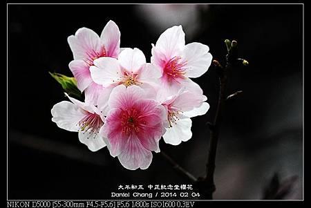 nEO_IMG_140204--CKS Cherry Blossoms 153-800.jpg