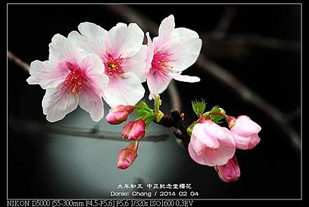 nEO_IMG_140204--CKS Cherry Blossoms 160-800.jpg