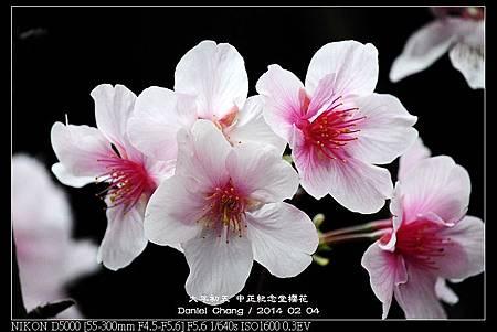 nEO_IMG_140204--CKS Cherry Blossoms 174-800.jpg