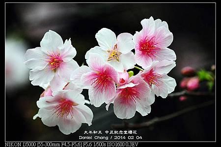 nEO_IMG_140204--CKS Cherry Blossoms 189-800.jpg