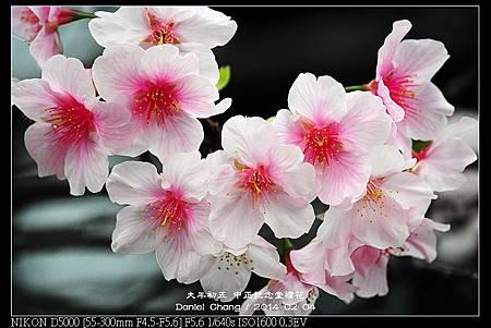 nEO_IMG_140204--CKS Cherry Blossoms 198-800.jpg