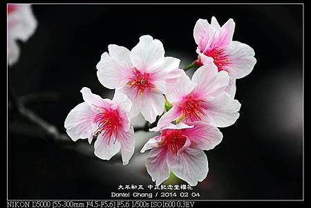 nEO_IMG_140204--CKS Cherry Blossoms 202-800.jpg