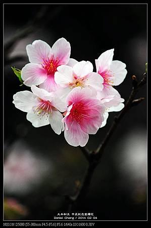 nEO_IMG_140204--CKS Cherry Blossoms 207-800.jpg