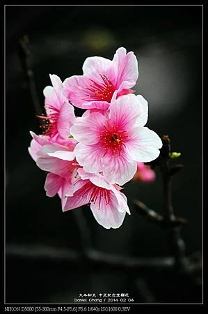 nEO_IMG_140204--CKS Cherry Blossoms 209-800.jpg