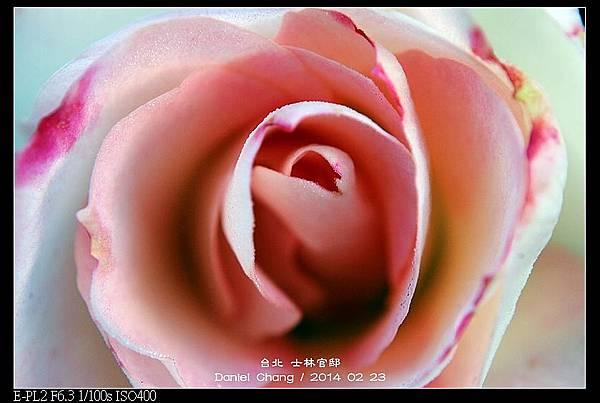nEO_IMG_140223--Flowers 003-800.jpg