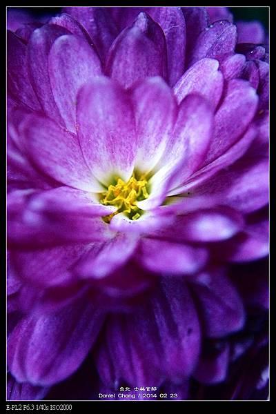 nEO_IMG_140223--Flowers 020-800.jpg