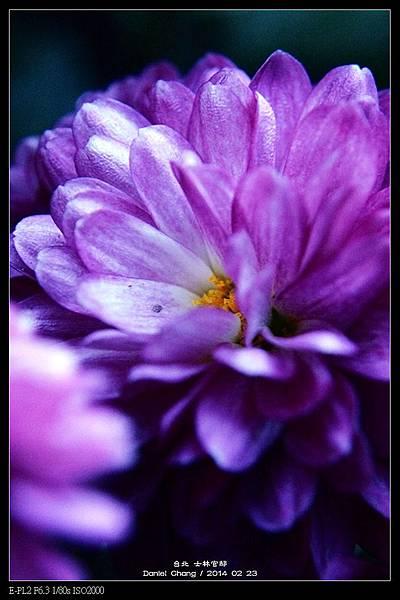 nEO_IMG_140223--Flowers 021-800.jpg