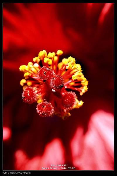 nEO_IMG_140223--Flowers 076-800.jpg
