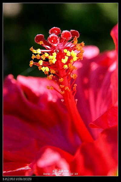 nEO_IMG_140223--Flowers 084-800.jpg