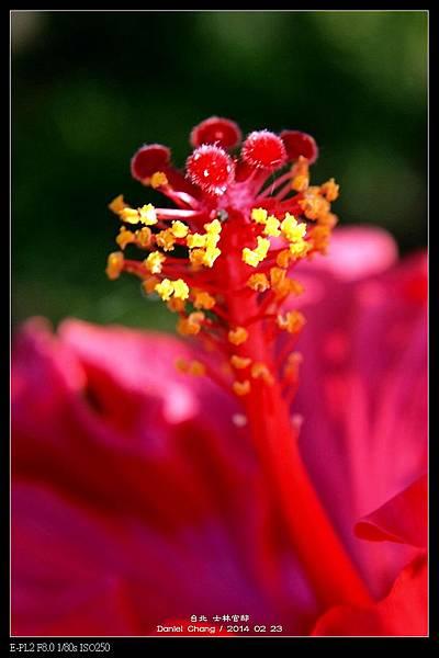 nEO_IMG_140223--Flowers 088-800.jpg