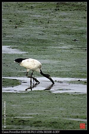 nEO_IMG_141130--HuaJiang Bird Park 030-1000.jpg