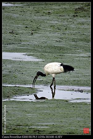 nEO_IMG_141130--HuaJiang Bird Park 033-1000.jpg