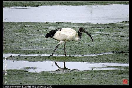 nEO_IMG_141130--HuaJiang Bird Park 106-1000.jpg