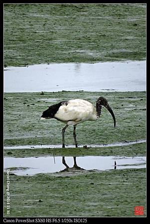 nEO_IMG_141130--HuaJiang Bird Park 127-1000.jpg