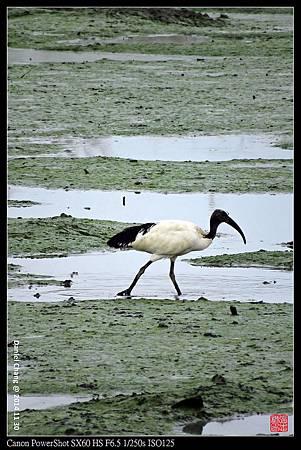 nEO_IMG_141130--HuaJiang Bird Park 141-1000.jpg