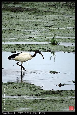 nEO_IMG_141130--HuaJiang Bird Park 144-1000.jpg