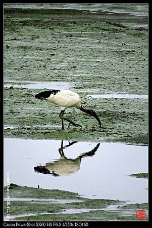 nEO_IMG_141130--HuaJiang Bird Park 159-1000.jpg
