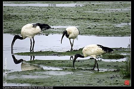 nEO_IMG_141130--HuaJiang Bird Park 164-1000.jpg