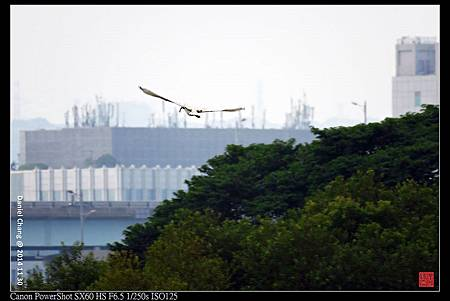nEO_IMG_141130--HuaJiang Bird Park 177-1000.jpg