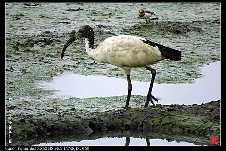 nEO_IMG_141130--HuaJiang Bird Park 226-1000.jpg