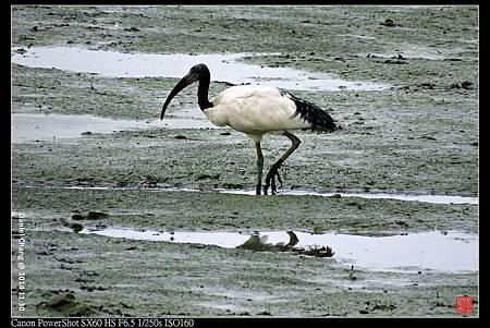 nEO_IMG_141130--HuaJiang Bird Park 236-1000.jpg