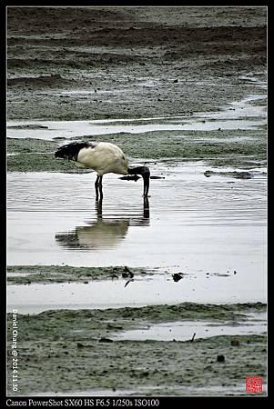 nEO_IMG_141130--HuaJiang Bird Park 242-1000.jpg