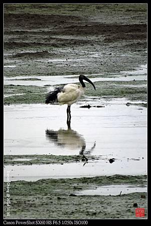 nEO_IMG_141130--HuaJiang Bird Park 253-1000.jpg
