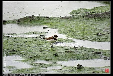 nEO_IMG_141130--HuaJiang Bird Park 263-1000.jpg