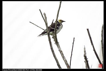 nEO_IMG_141130--HuaJiang Bird Park 275-1000.jpg