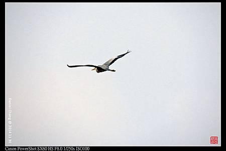 nEO_IMG_141130--HuaJiang Bird Park 301-1000.jpg