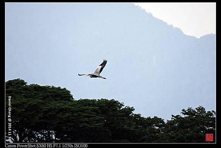 nEO_IMG_141130--HuaJiang Bird Park 306-1000.jpg
