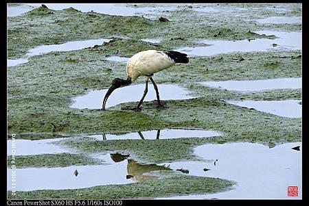 nEO_IMG_141130--HuaJiang Bird Park 319-1000.jpg