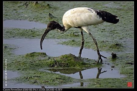 nEO_IMG_141130--HuaJiang Bird Park 326-1000.jpg