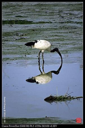 nEO_IMG_141130--HuaJiang Bird Park 341-1000.jpg