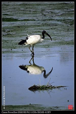 nEO_IMG_141130--HuaJiang Bird Park 345-1000.jpg