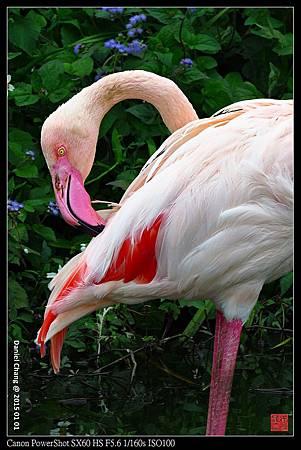 nEO_IMG_150101--Taipei Zoo 001-1000.jpg