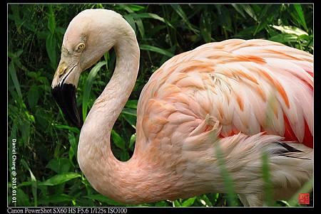 nEO_IMG_150101--Taipei Zoo 003-1000.jpg