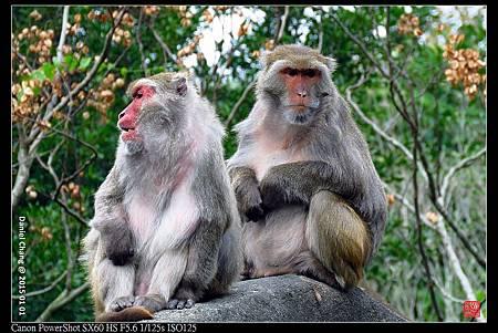 nEO_IMG_150101--Taipei Zoo 017-1000.jpg