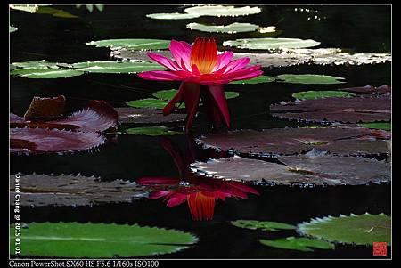 nEO_IMG_150101--Taipei Zoo 073-1000.jpg
