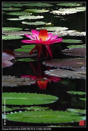 nEO_IMG_150101--Taipei Zoo 075-1000.jpg