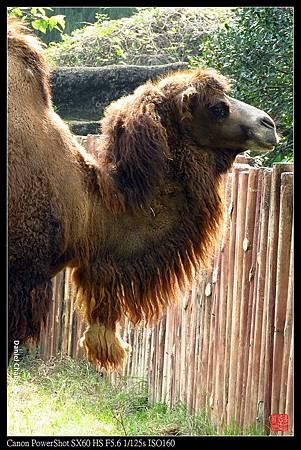 nEO_IMG_150101--Taipei Zoo 088-1000.jpg