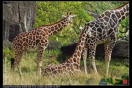 nEO_IMG_150101--Taipei Zoo 098-1000.jpg