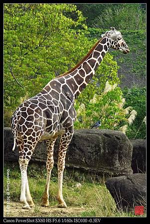 nEO_IMG_150101--Taipei Zoo 107-1000.jpg