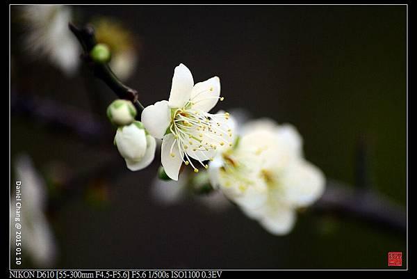 nEO_IMG_150110--Heihua D610 017-1000.jpg
