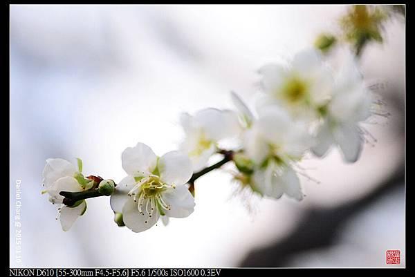 nEO_IMG_150110--Heihua D610 019-1000.jpg
