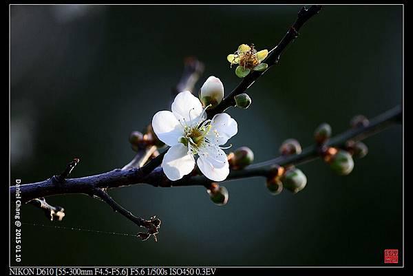 nEO_IMG_150110--Heihua D610 035-1000.jpg