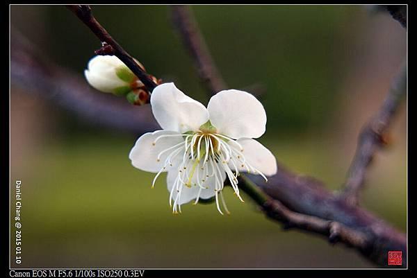 nEO_IMG_150110--Meihua EOS M 020-1000.jpg